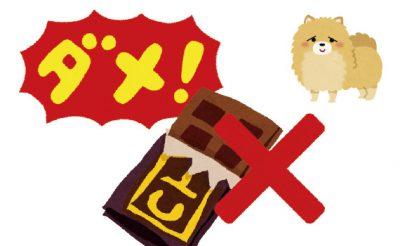 愛犬とチョコ